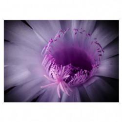 Image encadrée baguette minimaliste Fleur lilas - MDF - 51x7