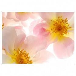 Image encadrée baguette minimaliste Fleur rose - MDF - 51x71