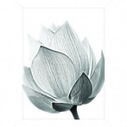 Cadre pour coffre ou étagere Fleur Gris 2 - 18 x 24 cm - Bla