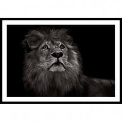 KING Affiche encadrée 60x40cm - Lion noir & blanc