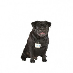 BIMAR Camera avec collier - Pour chien et chat